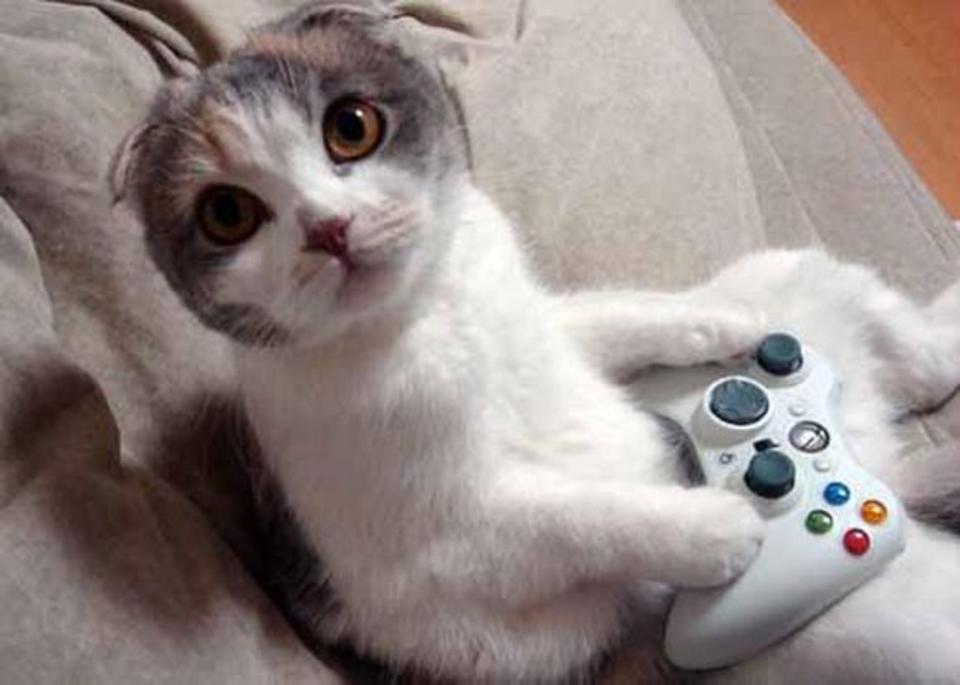 Картинке смешные кошки и котята и коты до слез